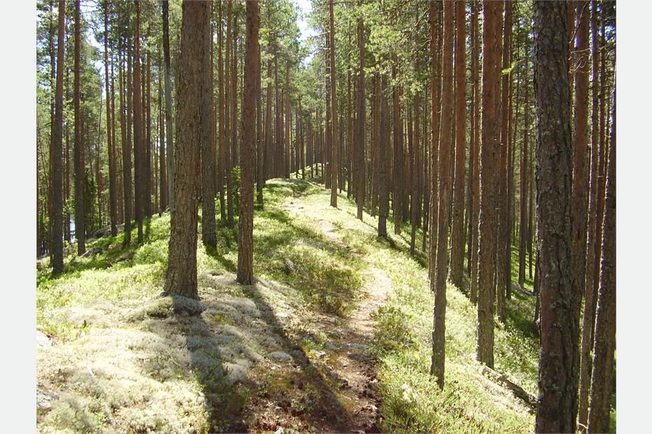 Skålsjön 302, Hälsingland, Viksjöfors - Övrigt